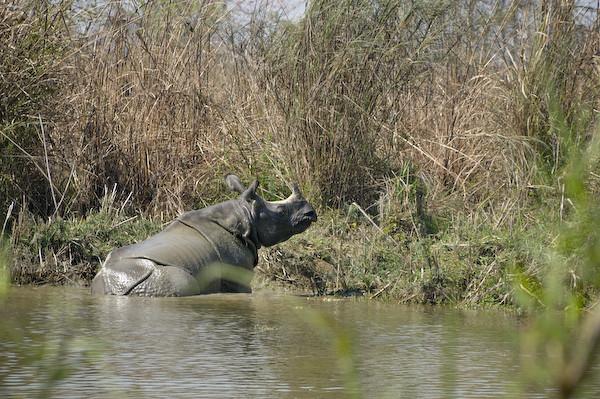 RhinoLa5533