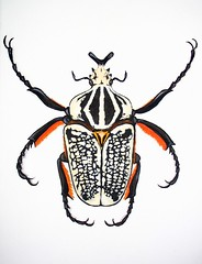 Goliath Beetle, acrylic on canvas (Oxana Kostromina) Tags: acrylic canvas goliathbeetle