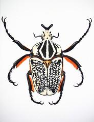 Goliath Beetle, acrylic on canvas (Oxana Kostromina) Tags: acrylic canvas goliathbeetle