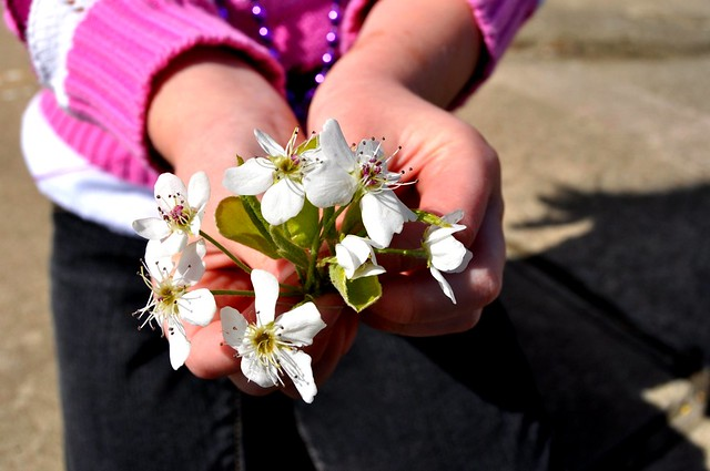 handful of flowers