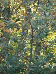"""Efterårsfarver • <a style=""""font-size:0.8em;"""" href=""""http://www.flickr.com/photos/53551333@N05/5525327995/"""" target=""""_blank"""">View on Flickr</a>"""
