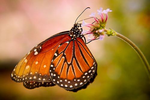 Butterfly at Epcot(R) Flower & Garden Festival