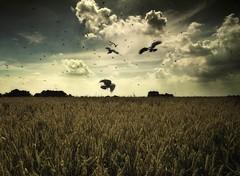 (soleá) Tags: light sky holland nature dutch field clouds landscape photography photo europe flickr foto fotografie gonzalez carmen cropfield soleá carmengonzalez