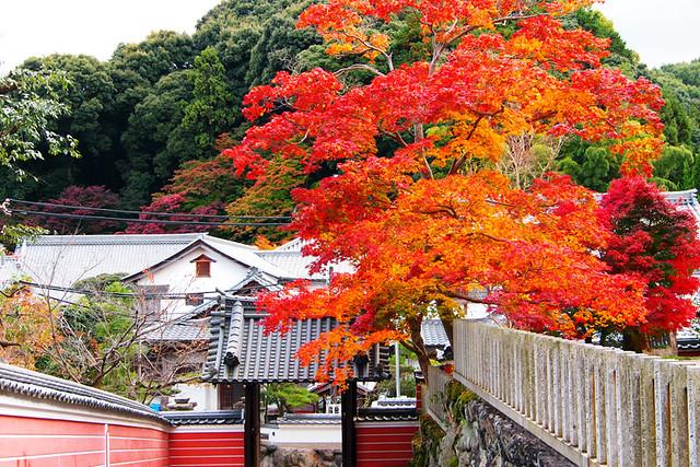 20101118_135723_當麻寺