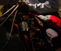 En memoria de Argentino Luna (Eduardo Amorim) Tags: horse southamerica argentina leather criollo caballo cheval artwork whip poncho cavallo cavalo gauchos pferd pampa riendas pala apero gaucho leatherwork cuero américadosul carona cuir gaúcho amériquedusud provinciadebuenosaires bastos recado gaúchos basto couro sudamérica sanantoniodeareco matras cuoio suramérica américadelsur areco südamerika crioulo caballoscriollos pelego criollos pilchas pilchasgauchas recao pampaargentina americadelsud lombilho rebenque crioulos cavalocrioulo cincha americameridionale caballocriollo rédeas eduardoamorim cavaloscrioulos xergão lomillo cojinillo pampaargentino