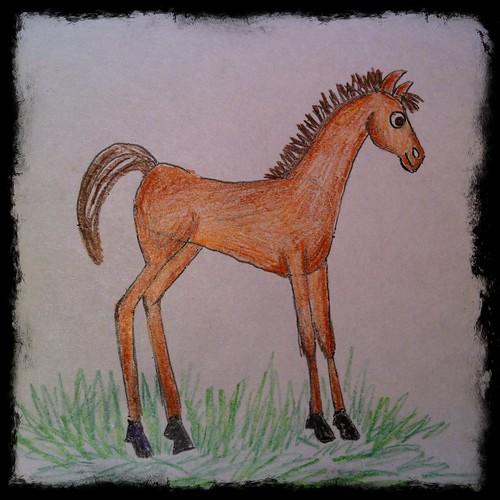 A colt