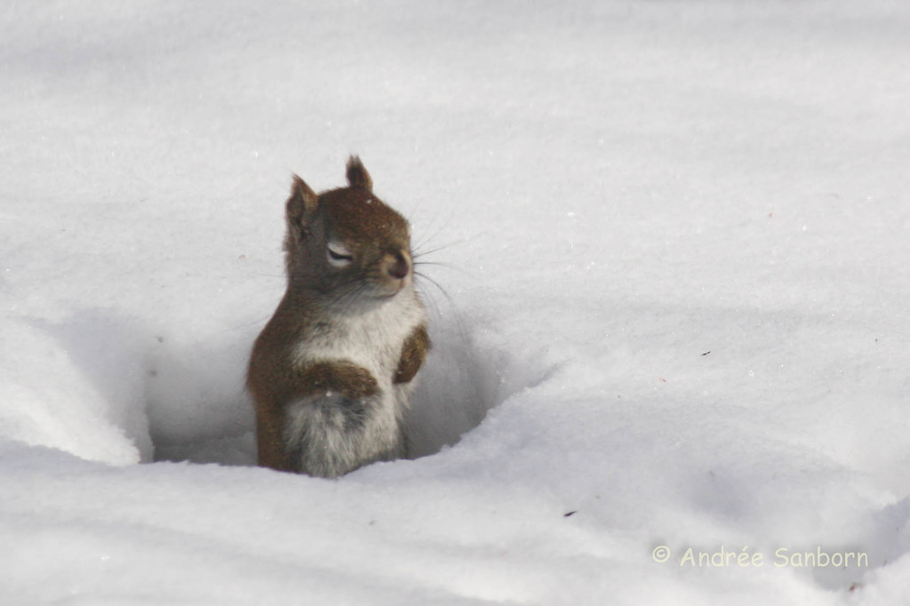Red Squirrel at the Feeders (5 of 10).jpg