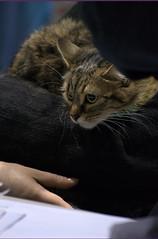 DSC_0064 (Francesco_Fontana) Tags: cat kat chat gato katze mace  macska gatto  con kot gat koka kedi kass katt kissa kttur maka kucing pusa mo   kat  kais    pisic  qattus   kais