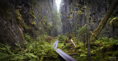 Orinoro ravine -1454 (>>Marko<<) Tags: nature outdoor luonto suomi finland canon valokuvaus pitkospuut rotko gorge gulch chasm ravine moss mustinmki leppvirta orinoronrotko haze