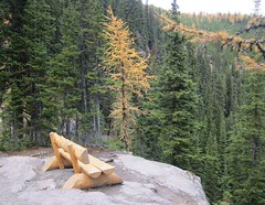 #autumn (Mr. Happy Face - Peace :)) Tags: autumn bliss hbm bench banff yyc rockymountains lakelouise hiking larch forest