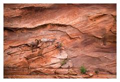 Saladworks (H.Drallmeyer) Tags: utah zion national park red bighorn rocks