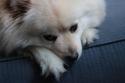 Meditative Buster