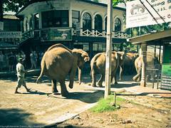 Бедный слон