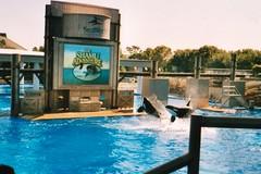 Shamu Adventure (CetusCetus) Tags: show old orlando florida dolphin 1999 adventure killer whale orca seaworld shamu