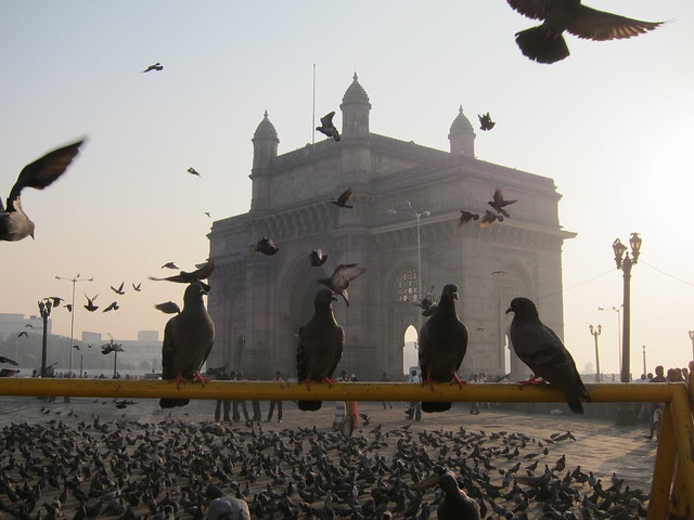 Pigeons hanging out by Gateway to India