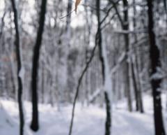 Blurry Winter (ZacharyMartinez) Tags: trees winter snow 120 forest blurry fujifilm velvia50 mamiya7 150mm