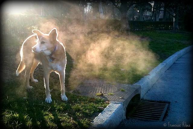 (283) Baño de vapor