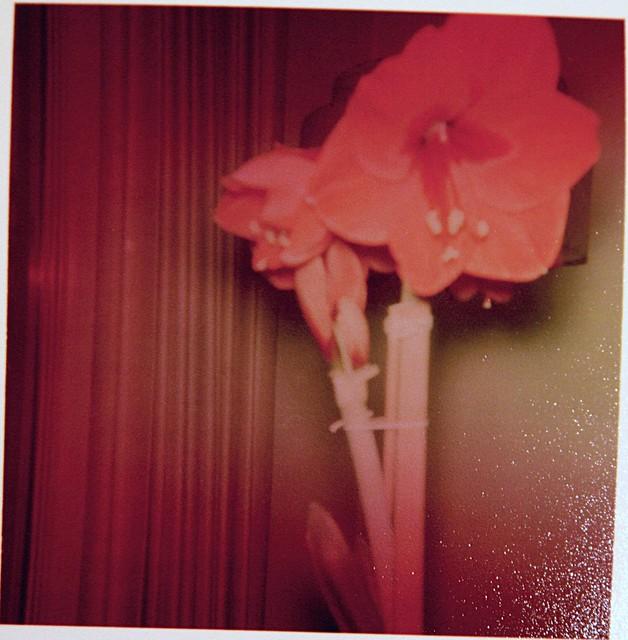 found flowers
