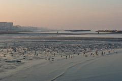 Lungo spiagge sconosciute (scarpace87) Tags: sea beach field dock sand nikon mare seagull campo depth spiaggia molo gabbiani sabbia 105mmf28 luciobattisti profondità cocali unoinpiù cuchel