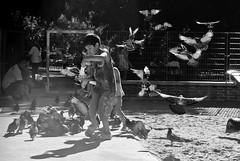 Flautista (Juan Ignacio Garay) Tags: plaza boy sun game sol childhood square corn day pigeons dia palomas juego infancia nio maz
