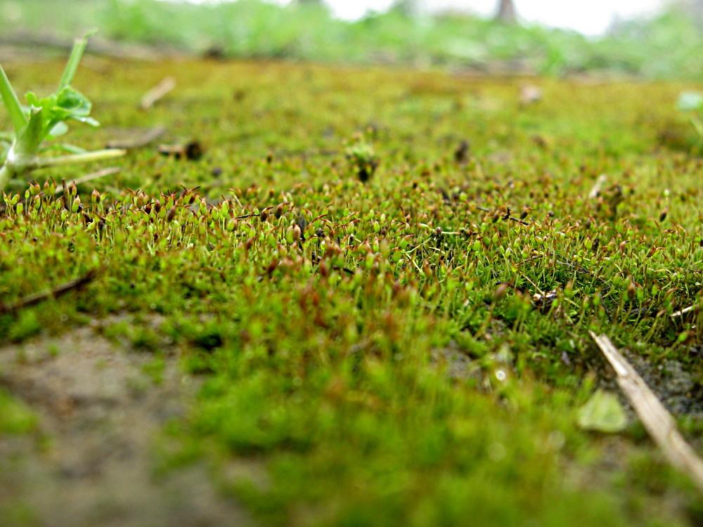 05-02-2011-green-velvet-mos
