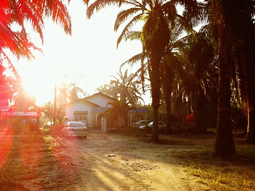 the house in the middle of palm oil trees