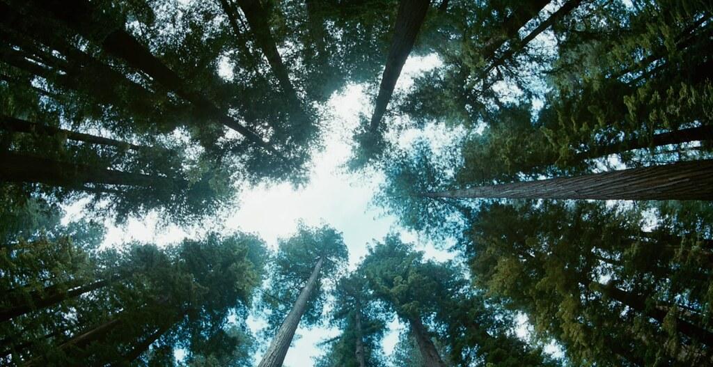 Tree-of-Life88