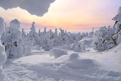 [フリー画像] 自然・風景, 雪, 森林, 樹木, 201102150500