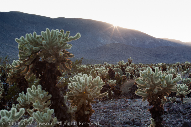 Sunburst over the Cholla Garden