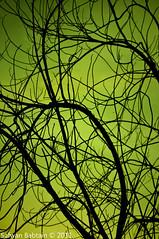 [ Silhouette] ~ (Safwan Babtain -  ) Tags: silhouette ~    70300