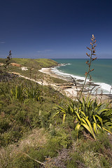 Start of Hokianga coastal track