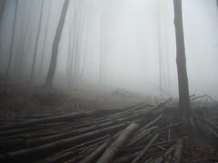 IMGP0007 (gzammarchi) Tags: italia natura nebbia albero paesaggio collina legna bosco camminata itinerario cadelvento monterenziobo