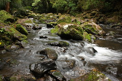 Puketi. River scene (nznatives) Tags: summer waterfall rocks stream nz freshwater nznative northlandnz riverscene puketiconservationarea mangakarakastream