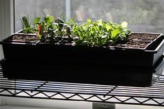 seedlings 018