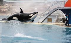 Orque (indexiessid) Tags: orque ctac paulard mammifremarin