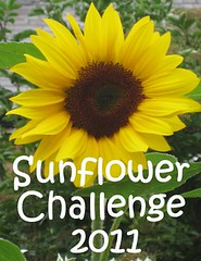 5468438749 76c1e08a3c m Join the Have a Lovely Time and NurtureStore Sunflower Challenge