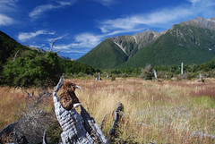 The kiwi in Travers Valley Photo