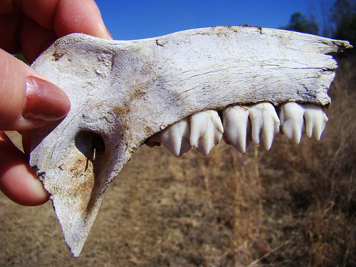 jaw 1