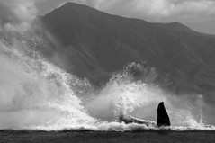 "_DSC4957 c ""wave maker"" 1          2.3k (ChanHawkins) Tags: onde wavemaker goldstaraward doublyniceshot"