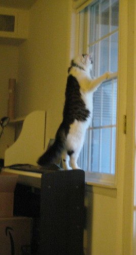 Tall Kitty!