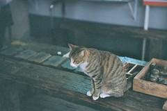 Cat。Cat。Cat (Nisa Yeh) Tags: taiwan nikons2 135film houtong 猴硐 rueifangtownship nikkorsc5cmf14 lomography800 newtaipeicity feb18fri2011