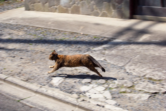 Today's Cat@2011-02-26