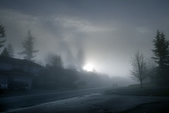 Sur la pente (sparth) Tags: seattle leica morning trees car fog pine la washington january foggy voiture redmond pacificnorthwest sur brouillard pente x1 matin sammamish 2011 leicax1 surlapente