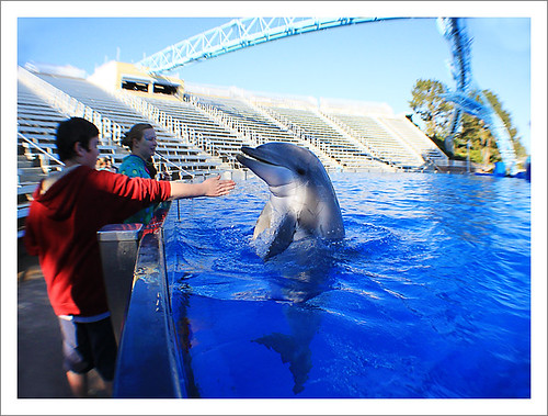 1sam dolphin