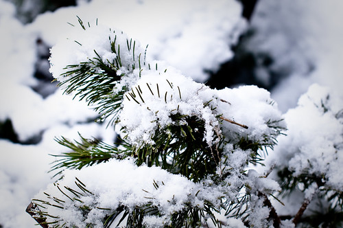 Snow end Feb 018