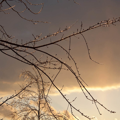 Sparkling Branches Against the Evening Sky