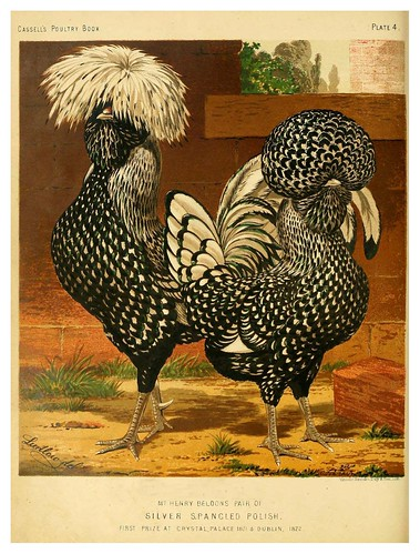 005--The illustrated book of poultry. With practical scheduals…1873-Lewis Wright
