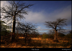 The Bush (david.gill12) Tags: