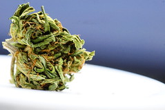 Northern Lights (The Tokeographer) Tags: cheese lights big weed twist blueberry bud marijuana northern buddah chronic kush