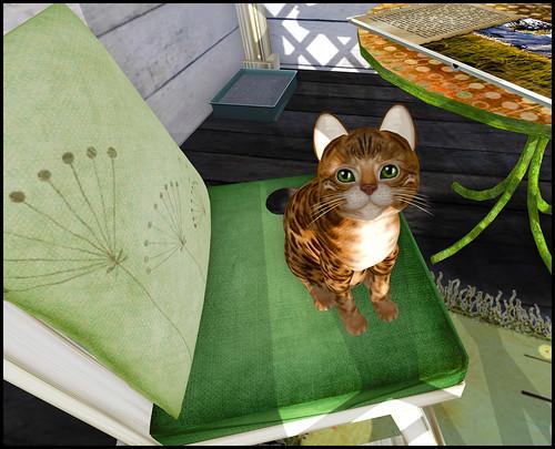 KittyCats - Bengalita